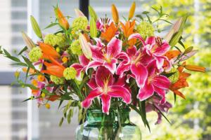 Flowering lilium bulbs