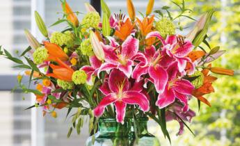 Lily – a wonderful summer flowering flower bulb